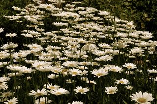 Woodstock Flowers